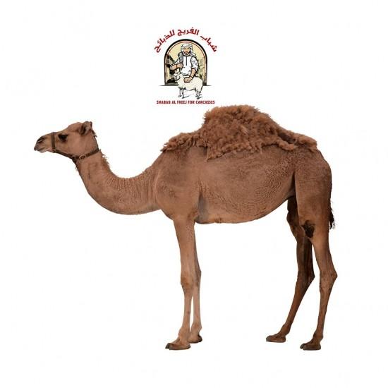 Local camel
