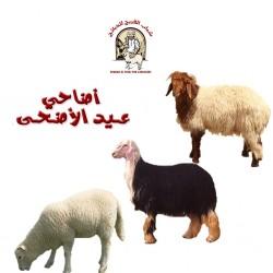 Sacrificial for eid اضاحي العيد